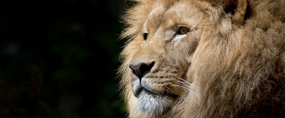 africa-african-animal-33045a